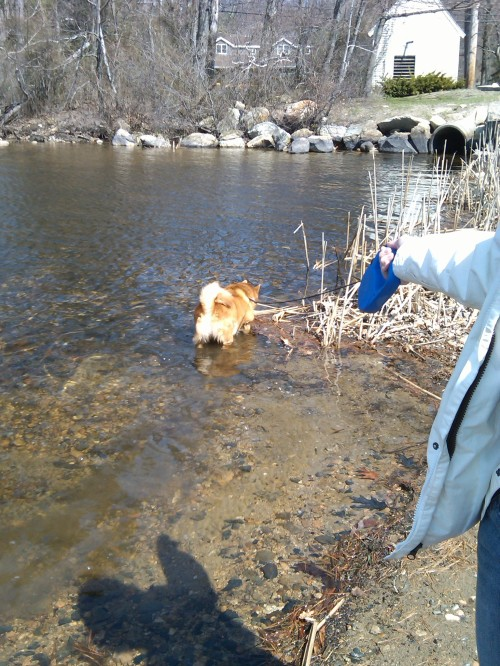 We wnet over to the boat launch and Ditto JUMPED IN!