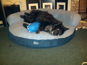 I can't hug my Ludo, so I like to lay and hug my Tuggie!