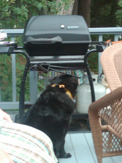 Since I couldn't trust the Hoomans with the hot dogs I figured I better man the grill machine...