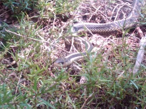 Hello Mr. Snake!