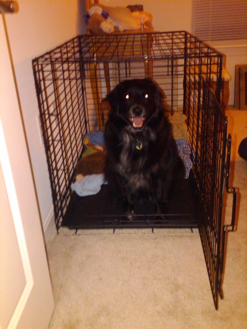 Kylie in crate