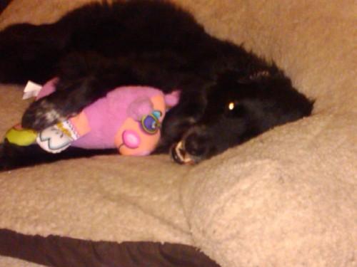 kylie & piggy