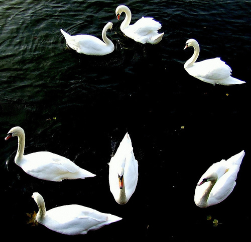 12 Days of Christmas Savings: Seven Swans A-Swimming in ...